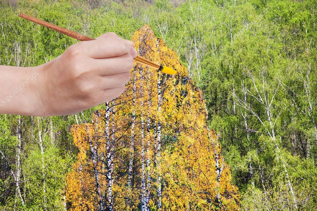 brush paints yellow autumn birch in green grove