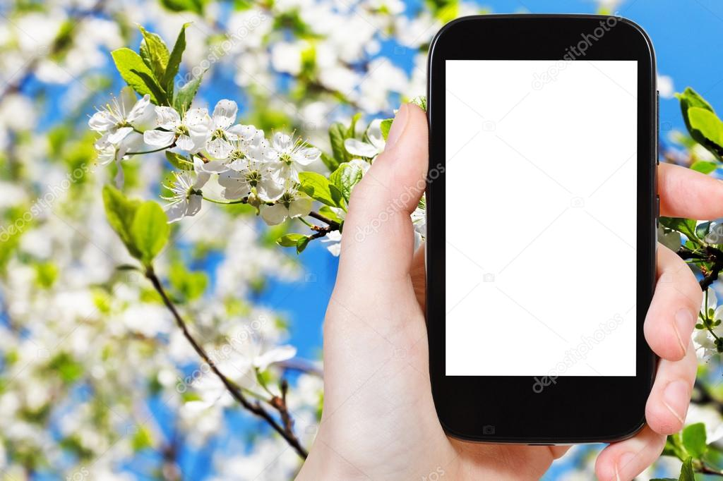 phone with cut out screen and white apple flower