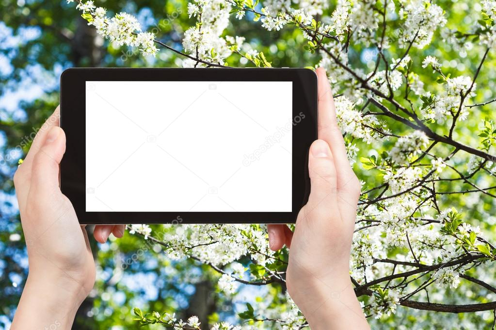 TabletPC und weiß blühenden Baum im Frühjahr — Stockfoto © vvoennyy ...
