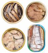 Fotografia impostare su Conserve di pesce in scatola aperta isolato su bianco