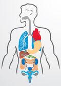 Fotografie Lidské orgány a lidské tělo - ilustrace