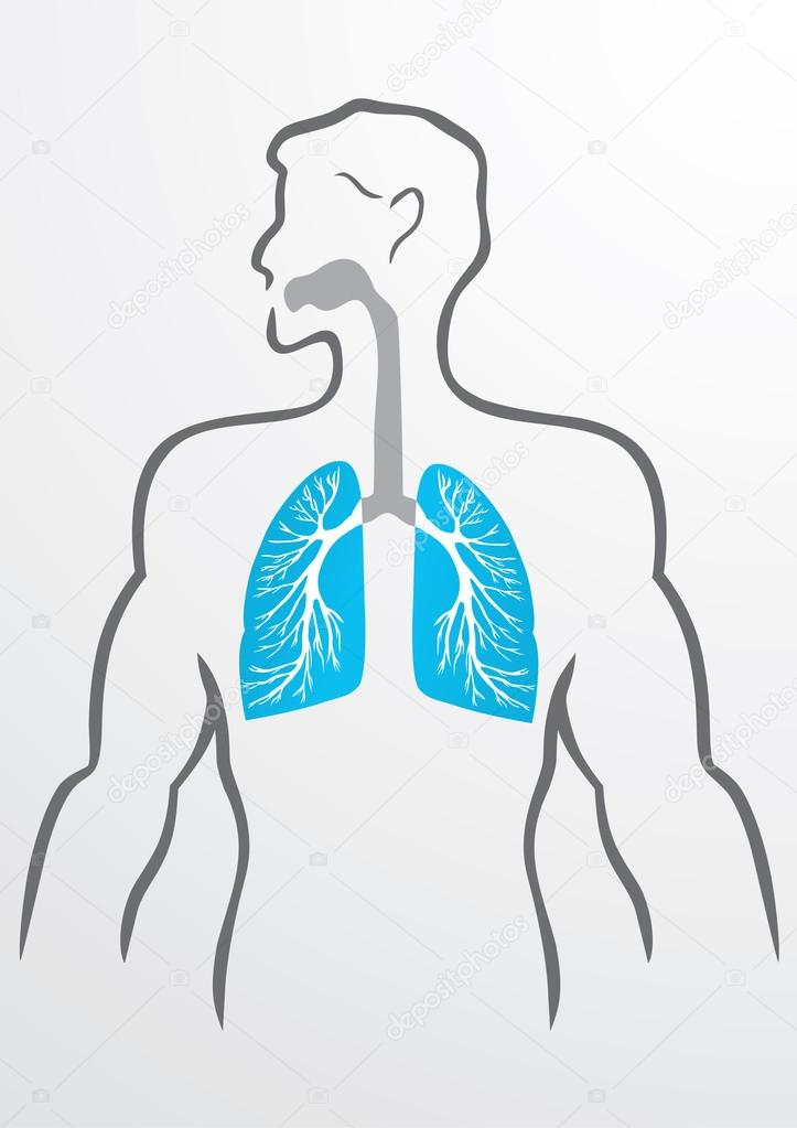 Lungs and human body - Illustration — Stock Vector © Timka #81083390