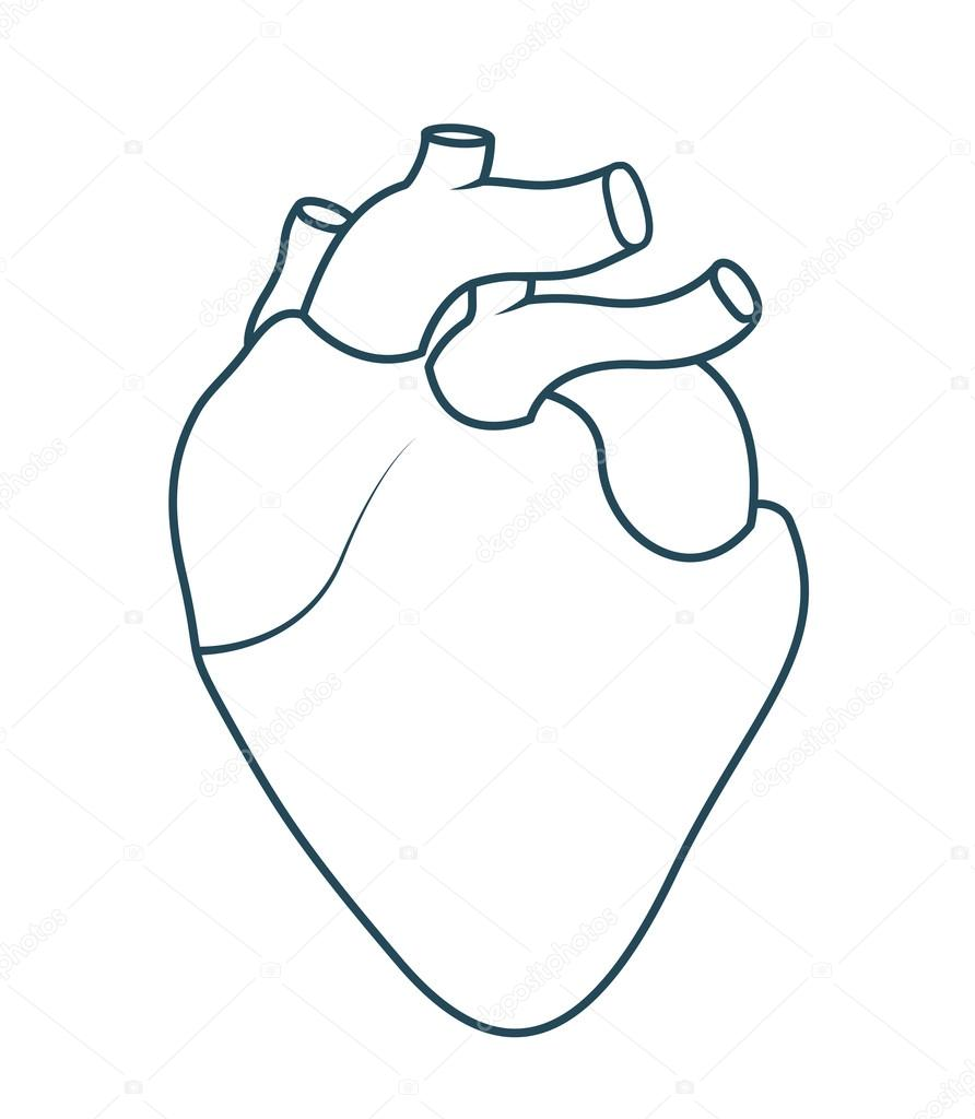 Dessin Coeur Humain anatomie du coeur humain isolé dessin icône — image vectorielle