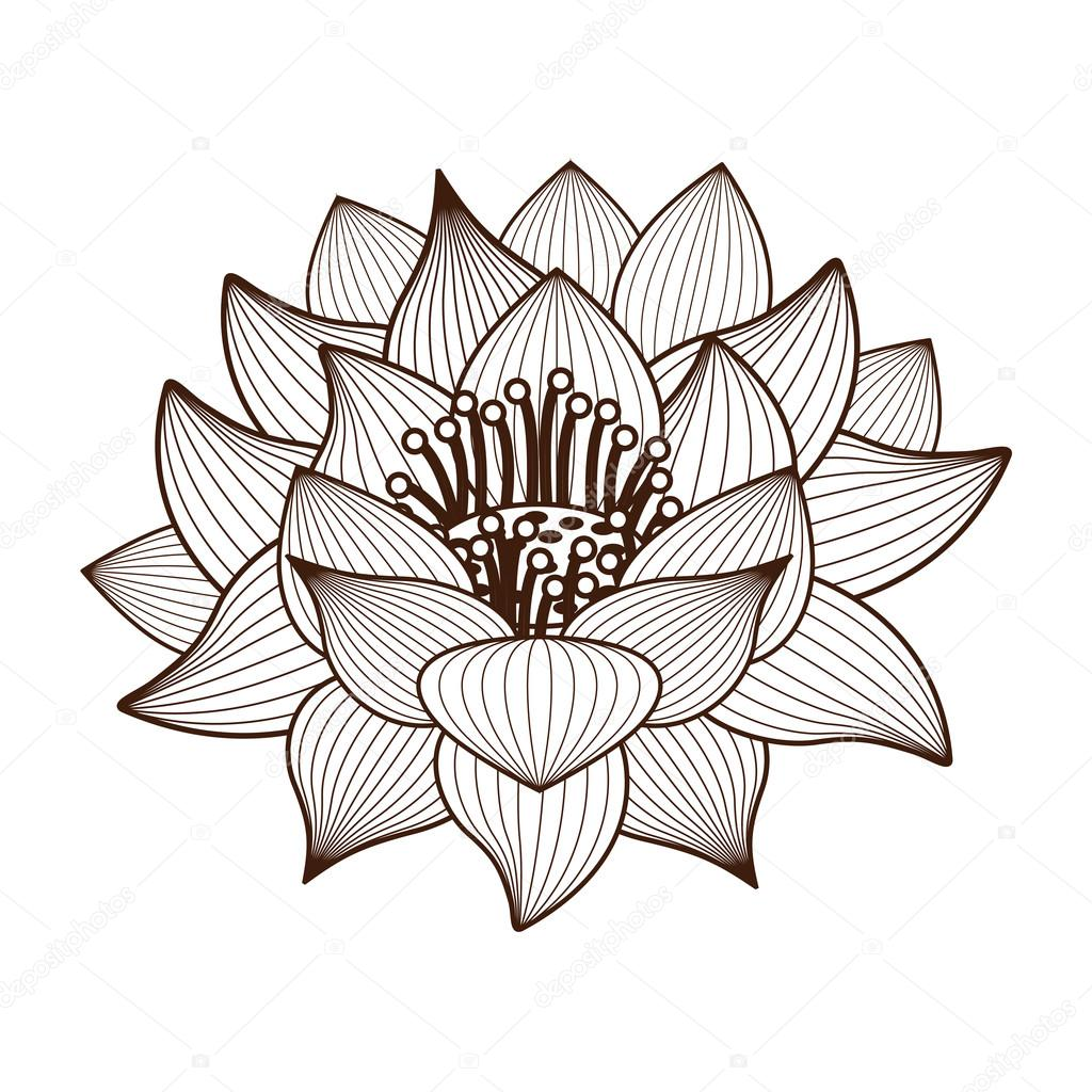 Lotus Flower Drawing Isolated Icon Design Stock Vector