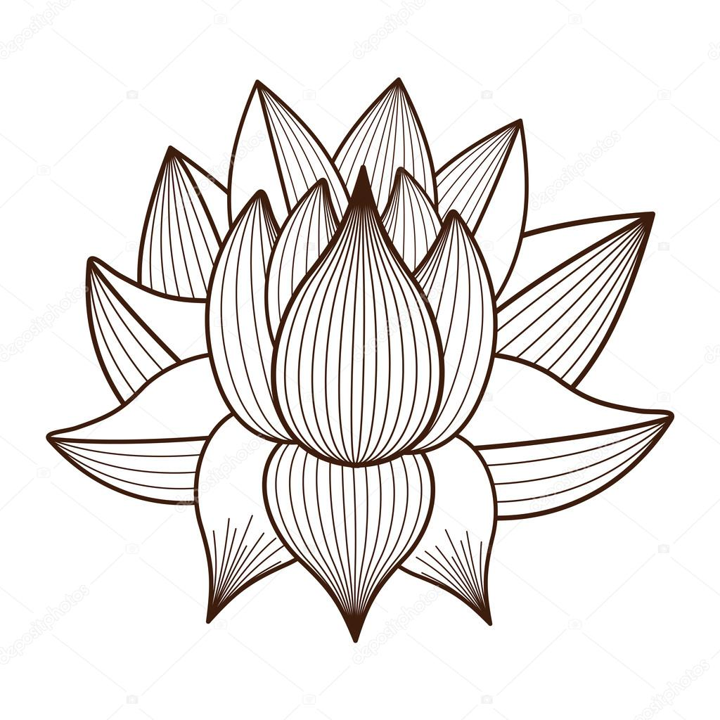 Lotus flower drawing isolated icon design — Stock Vector © grgroupstock 1172