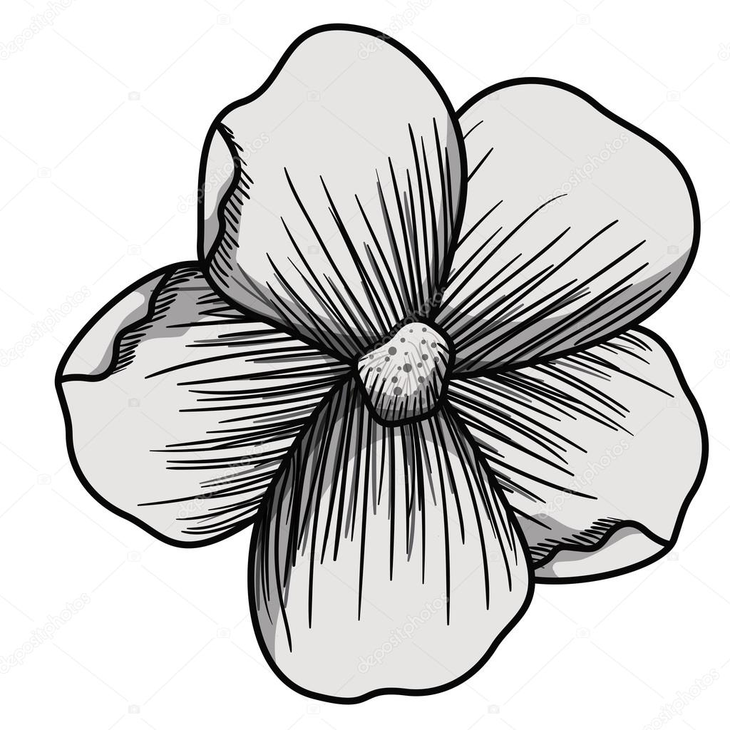 Beautiful Flower Drawing Isolated Stock Vector Grgroupstock