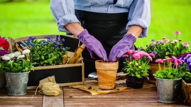 Práce na zahradě, výsadba hrnce