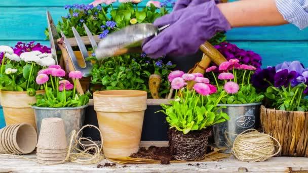Práce na zahradě, sázecí hrnce