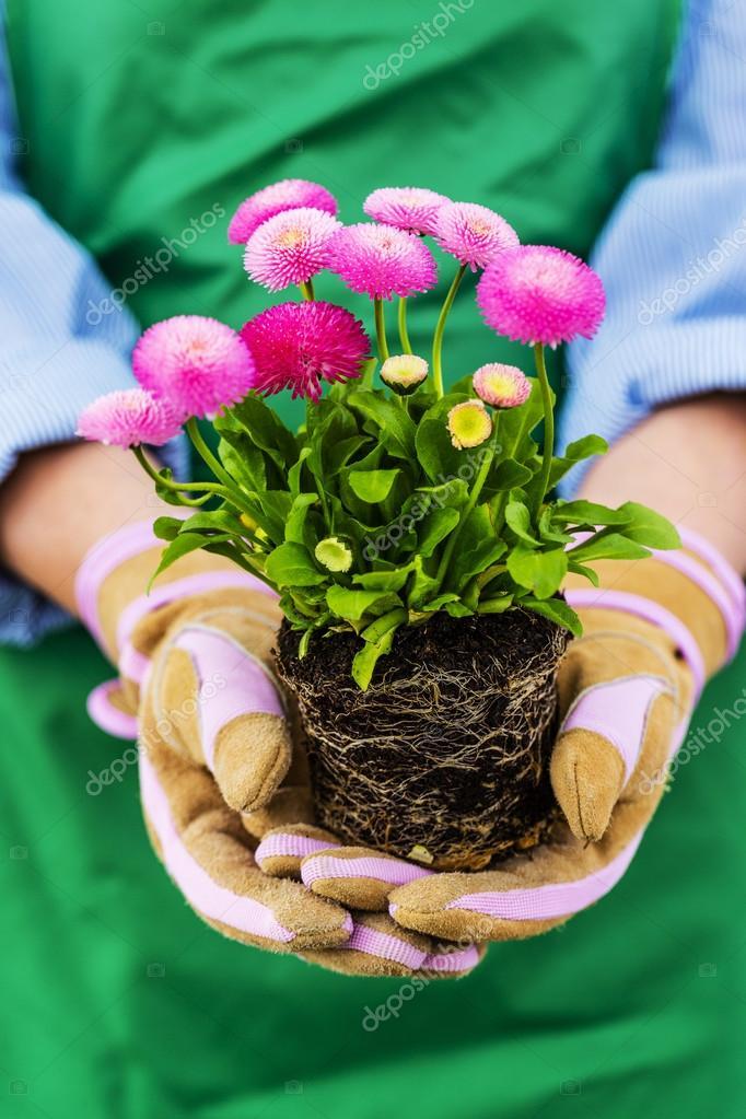 Gardening, Planting flowers