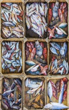 Fresh fish at a market in a Mediterranean port, collage