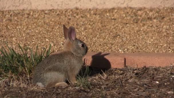 Roztomilé dítě Divoký králík