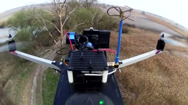 Drone, copter   films  dried tree through camera with gimbal. Rear fly