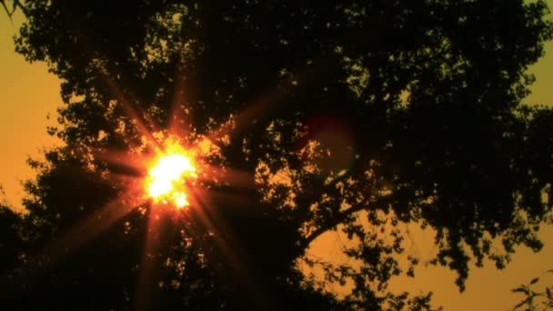 Sonnenschein und Baum. ntsc Sonnenaufgang Zeitraffer