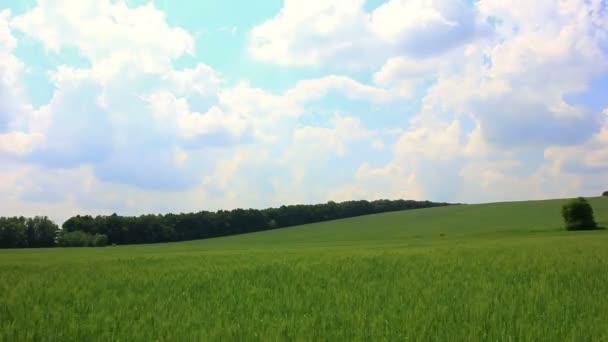 Krajina s pšeničné pole a mraky