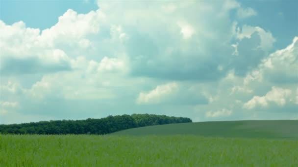 Krajina s pšeničné pole a mraky. Bez ptáků krajinu s pšeničné pole a mraky. Bez ptáků