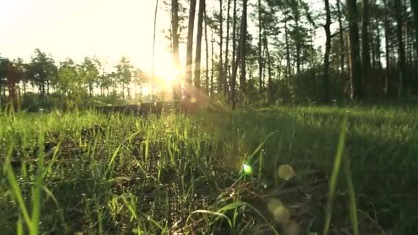slunečné ráno v lese. Zpomalený pohyb