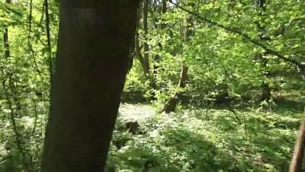 SpusÈte na dřevo sluneční den. Stabilizované video