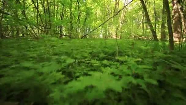 Tráva v lese. Zvířecí Pov. Stabilizované video.