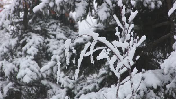 Zimní větev stromu s zablokované sníh