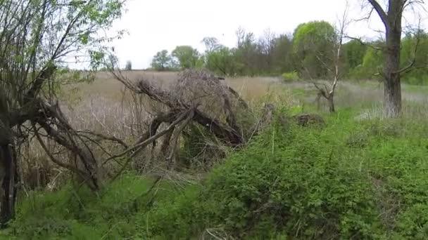 Repülés alatt régi fa, nád, vidéki területen. Légifelvételek