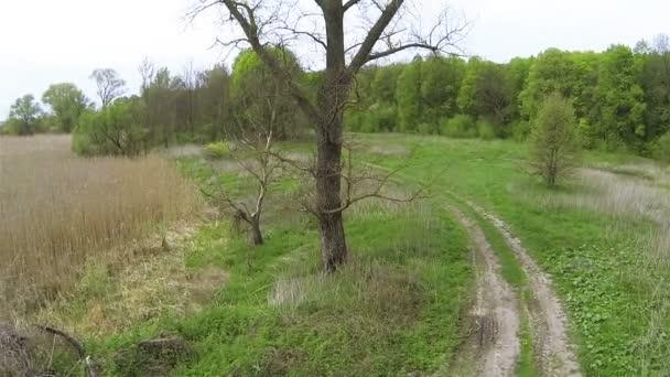 Járat át öreg fa, nád, vidéki területen. Légifelvételek