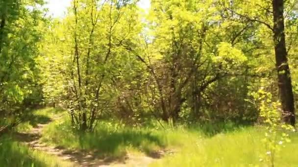 Pěšina v dřevěné hladké shot Walking.Steadicam.