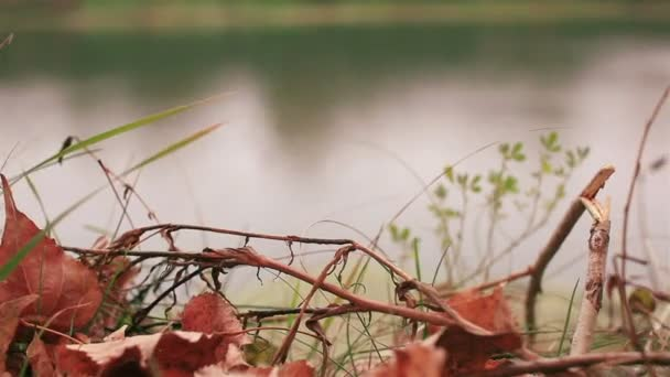 Červené podzimní listí a řeky. Dolly zastřelil