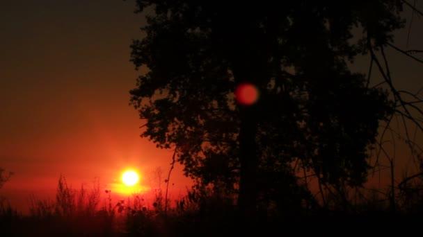 Ranní cesta slunce. Východ slunce mezi stromy. Časová prodleva