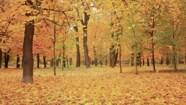 Sárga levelek lehullanak a fák. Ősz
