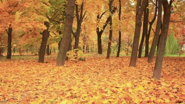 Zářivě žluté listy padají ze stromů. Podzim
