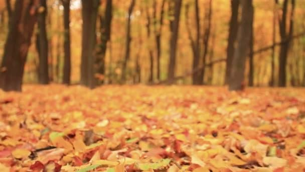 Pohyb nad listy. Na podzim. Stabilizované klip