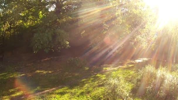 Solární letadlo v lese. Zpomalený pohyb
