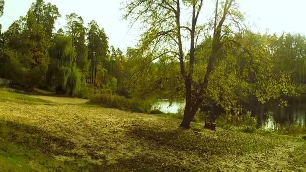 Podzimní krajina se stromem a rybník. Antény