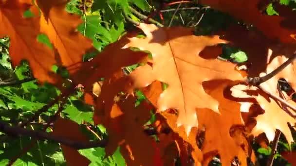 Zářivě žluté listy stromu zblízka