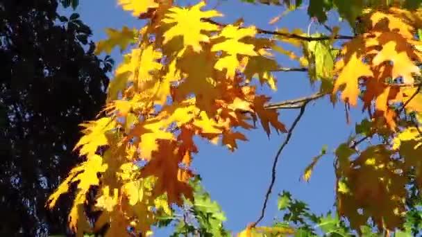 leuchtend gelbe Blätter des Baumes aus nächster Nähe. Landschaft