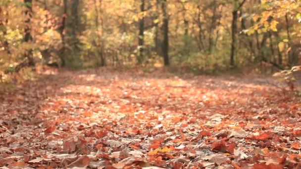 sonniges Herbstholz mit gelben Blättern. Schiebereglerschuss