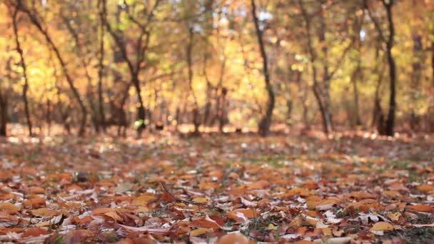 A levelek őszi erdő táj. Csúszka a lassú mozgás