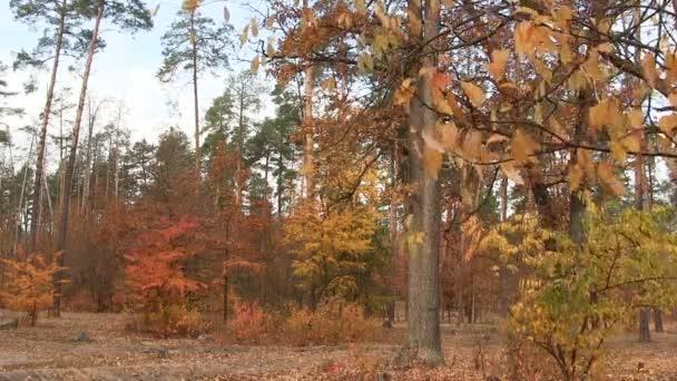 Větev stromu s žlutými listy a podzimní dřevo. Krajina Pal