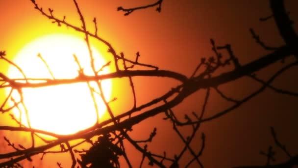Rudý východ slunce s velkým sluncem skrze větve stromů.
