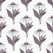 Fotografie hand drawn echinacea