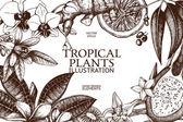 Fényképek Kézzel rajzolt trópusi gyümölcsök