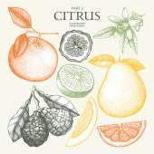 Sada citrusových plodů