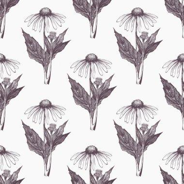 hand drawn echinacea