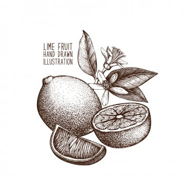 hand drawn limes