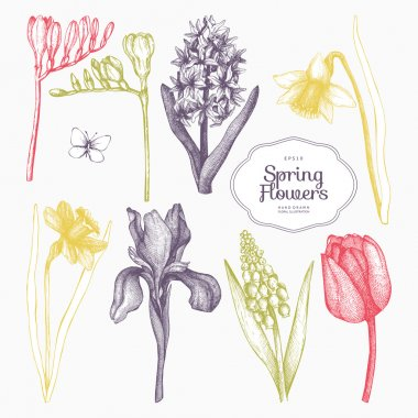 hand drawn spring flowers
