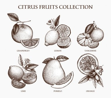 set of citrus fruits