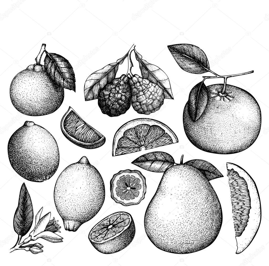 Owoce Szkic Grafika Wektorowa Owoce Polskie Warzywa Egzotyczne Wektory I Ilustracje Royalty Free Depositphotos