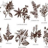 Fotografie Vintage botanical noxious plants sketches