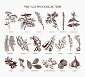 Fotografie Vintage set of spices and herbs