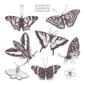 Vintage gyűjteménye pillangók